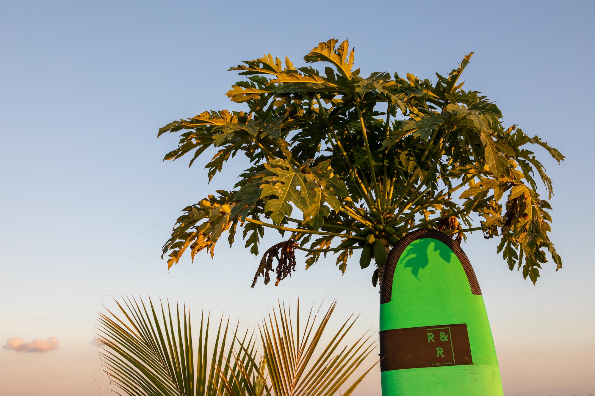 Board-tree